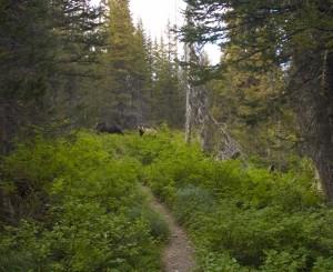bears-166 (600x490)